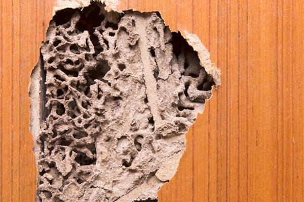 外壁ひび割れシロアリ